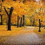 Fall Colors — Stock Photo #19342515