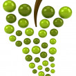 Green grapes illustration isolated on white — Stock Photo