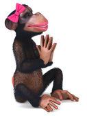 Seksowny małpa — Zdjęcie stockowe