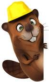 Beaver achitect — Stock Photo