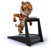 Tiger — Stock Photo