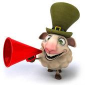 Irish sheep — Stock Photo