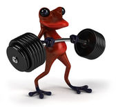 Strong red frog — Stock Photo