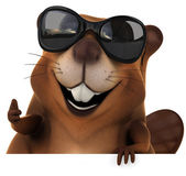 Beaver in sunglasses — Stock Photo