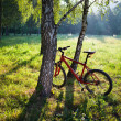 Red bike standing near a birch trunk on a spring sunny park — Stock Photo