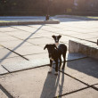 Two stray puppy in morning in sunny city — Stock Photo #19186411