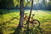 In piedi bicicletta rossa nei pressi di un tronco di betulla su un parco soleggiato di primavera — Foto Stock