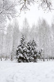 White winter landscape with trees — Stock Photo