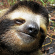 Sloth head - Photo
