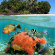 Under the sea & above the land — Stock Photo #13153560