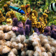 Colors of the sealife in the Caribbean sea — Stock Photo