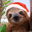 Royalty-Free Stock Photo: Baby sloth in red Santa Claus hat
