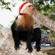 Monkey in red Santa Claus hat — Stock Photo