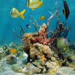 Colorful underwater scenery with corals and sea sponges - Stock Photo