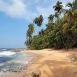 Unspoiled beach with lush vegetation — Stock Photo