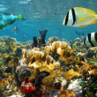 Fishes in a colorful coral reef - Stock Photo