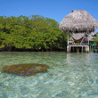 Palapa over the sea and coral - Stockfoto
