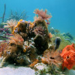 Colorful marine life - Foto Stock