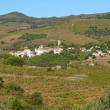 Mediterranean village and its vineyard fields - Foto Stock