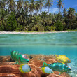 Tropical beach and coral reef - Stock Photo