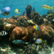 Underwater panorama in a coral reef — Stock Photo