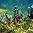 Colorful sea floor and fish — Stock Photo