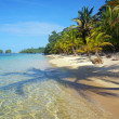 Pristine beach with shade of coconut trees — Stock Photo