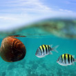 Coconut drift with fish under water surface — Stock Photo