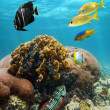 Beautiful coral with reef fish — Stock Photo