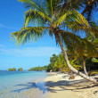 Leaning coconut tree on beach — Stock Photo