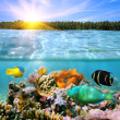 Sunset and colorful underwater marine life — Stock Photo