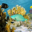 Colorful tropical fish in coral reef — Stock Photo