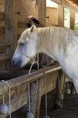 Horses feeding at the trough — Stock Photo