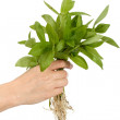 Human hand and young plant — Stock Photo