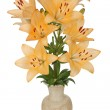 Asian lily flowers, lat. Asiatic Hybrids, in a ceramic vase, iso — Stock Photo #28753739