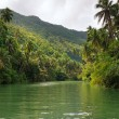Jungle river — Stock Photo