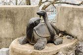 Tortoise and snake — Stock Photo