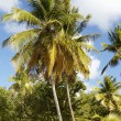 Tropical beach in Carribean — Stock Photo