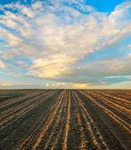 Feld und himmel — Stockfoto