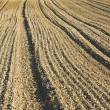 Stock Photo: Plowed earth