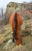 The horse is grazed on slope — 图库照片