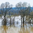 Wide flood of small river - Stock Photo