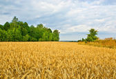 A field — Stock Photo