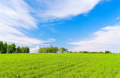 Land scène — Stockfoto