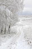 First snowfall — Stock Photo