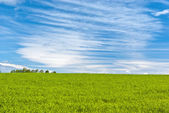 Green crops under striped clouds — Stock Photo
