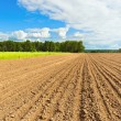 Plowed and sown field — Stock Photo