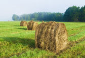 Haymaking — Stock Photo