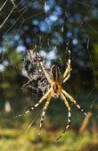 Pavouk při východu slunce — Stock fotografie