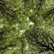 Canopy of branches — Stock Photo